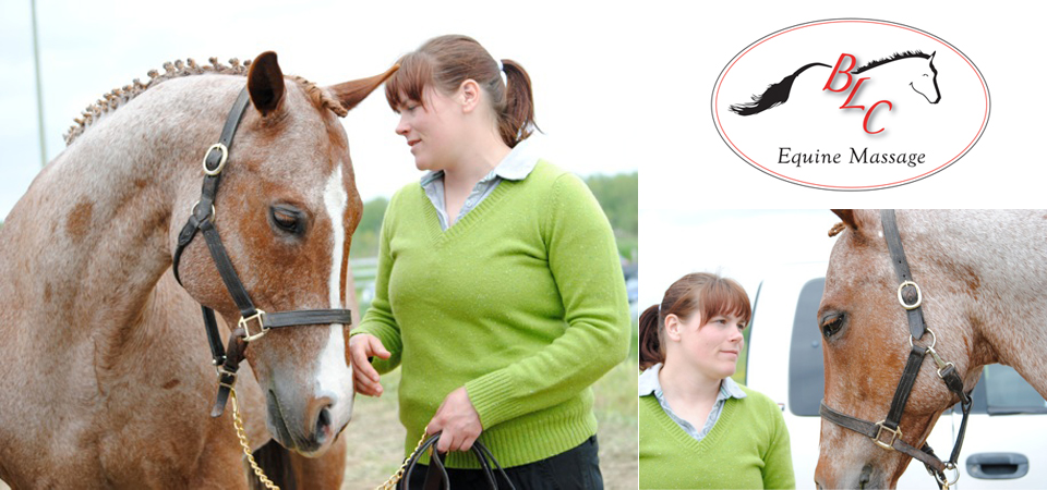 BLC Equine Massage - Homepage